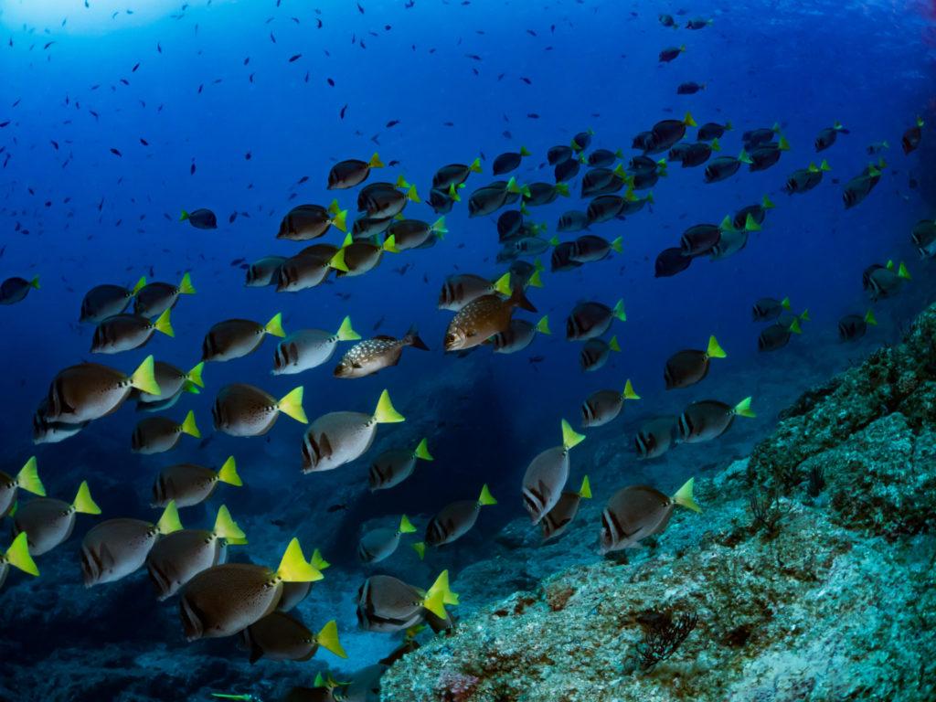 海底での魚の群れの写真