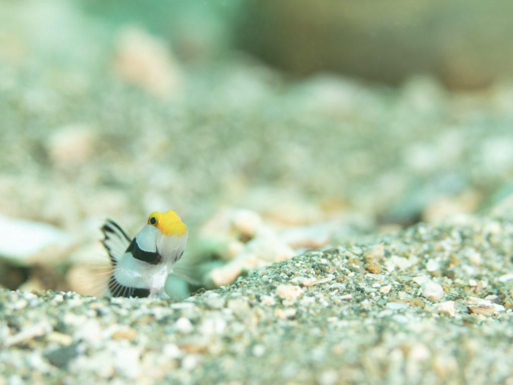 小さい熱帯魚の写真