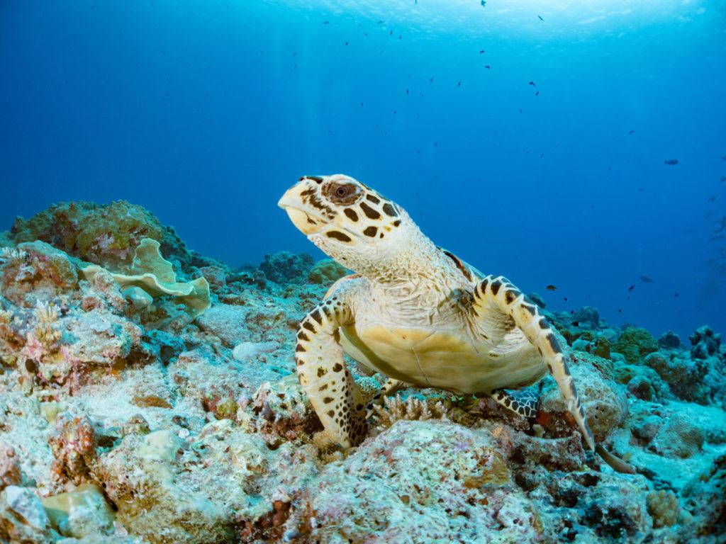 海亀の写真