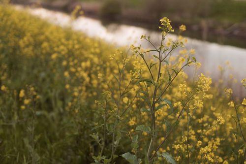 川原の花の画像