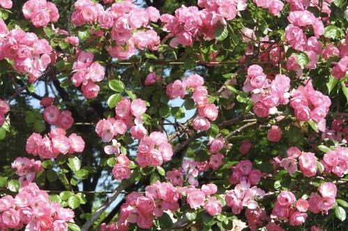 春の花の挿し絵
