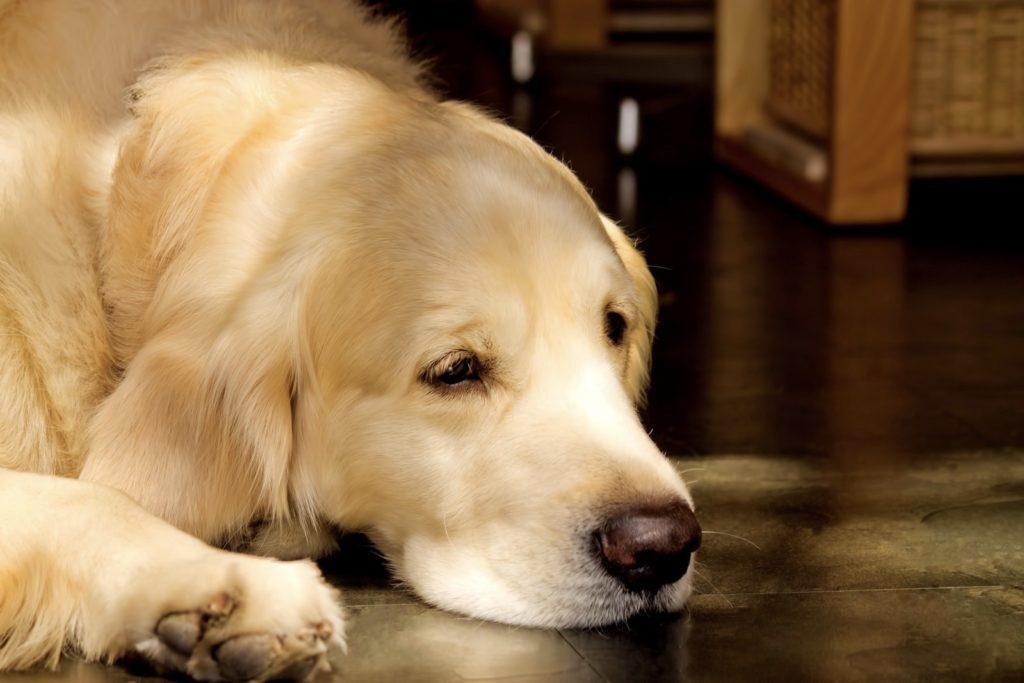 寝そべる犬の写真