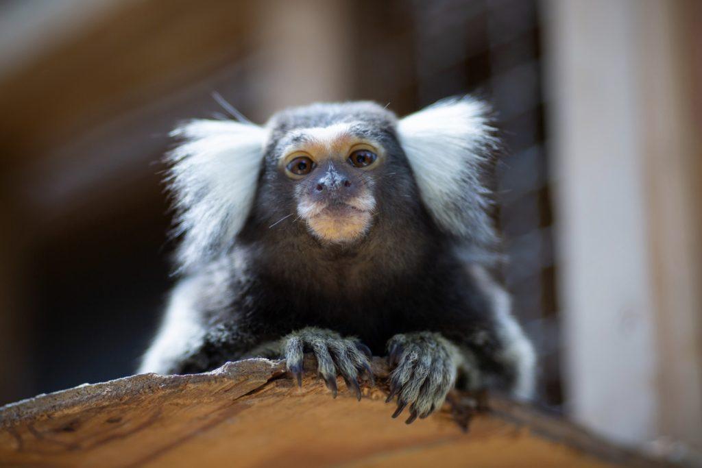 小さな猿のかわいい写真